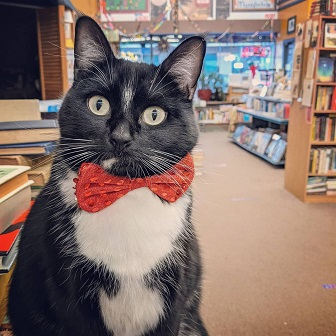 Main Street Book Bookstore Cat