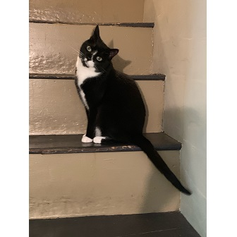 Oliver & Friends owner Renee's cat.