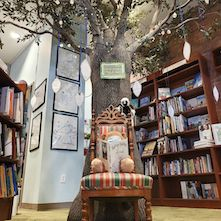 Stuffed animal reading book under a tree at Quail Ridge Books