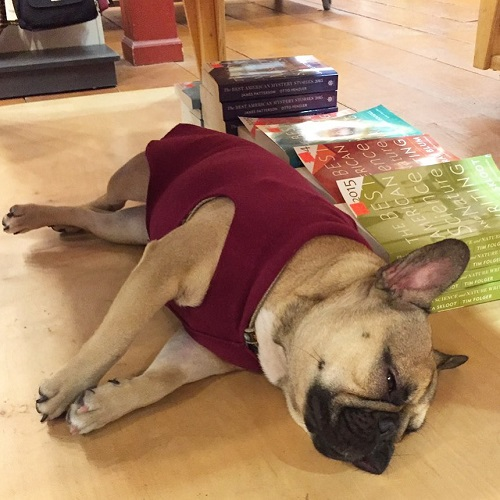 Copperfields Bookstore Dog