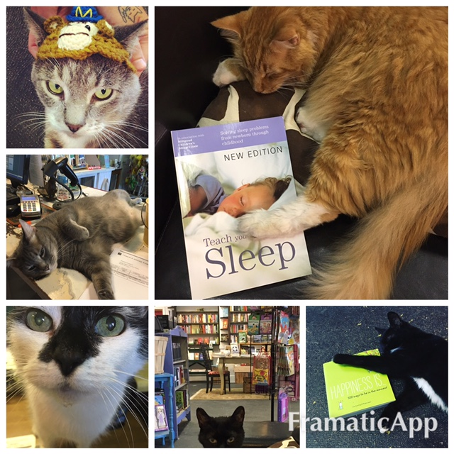 Foster cats at Duck's Cottage and Downtown Books