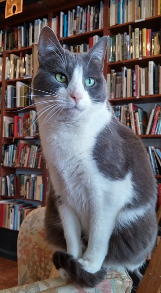 Otis at Loganberry Books in Cleveland, Ohio