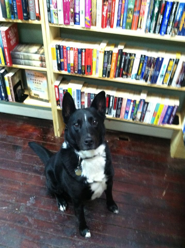 Riley at Dog Eared Books