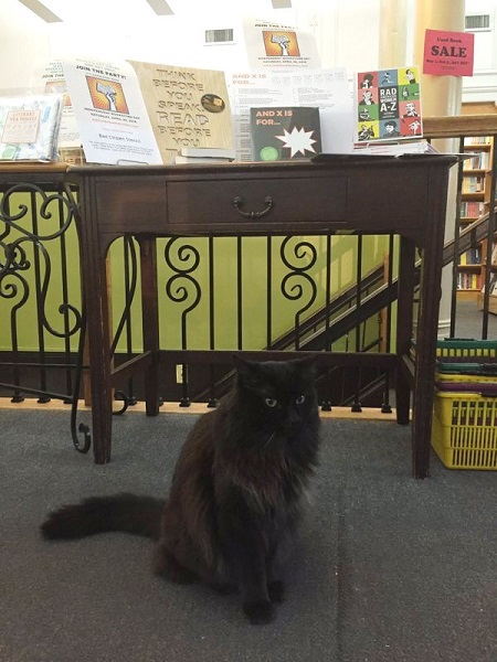 Spike at Left Bank Books in St. Louis, Missouri