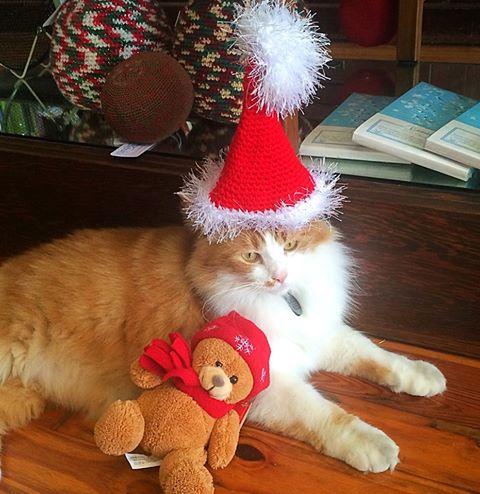 Horton's cat, Dante