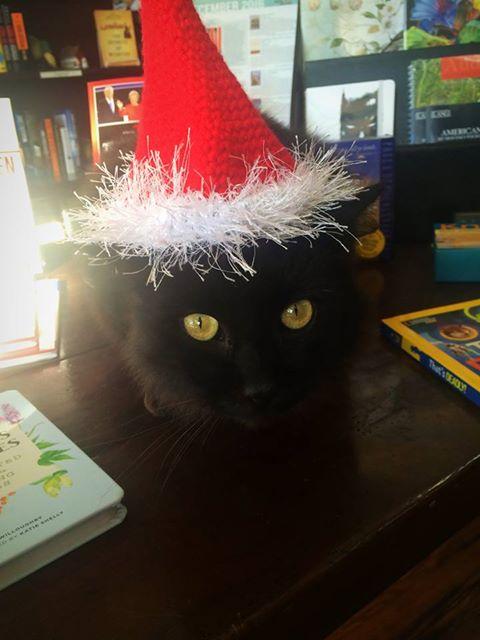 Horton's cat, Poe