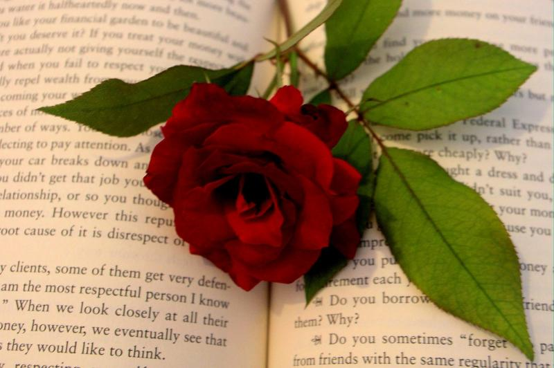 Romance novel with rose